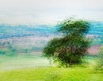 Trees - moving still