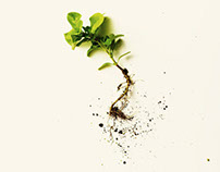 Unloved Plants
