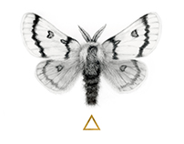 Moth to the Flame - A Graphite Moth Illustration