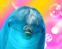 Dolfin`s alphabeet