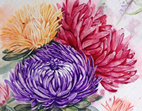 Watercolor asters