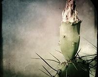 Desert Floral Studies