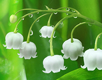 Lily of the valley for Megafon