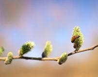 Spring is awake