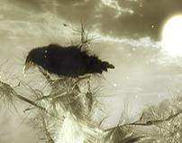 Arama, Music Video