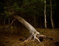 dark forests.