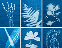 Cyanotype - photography