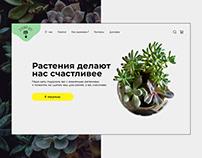 Green Friend | Online shop of indoor plants