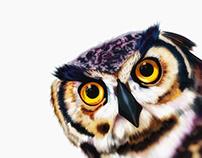 Illustration: Owl