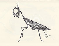 BALLPEN INSECTS