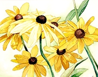 Commission - Black Eyed Susans