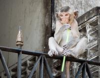 Photographie - La Thaïlande