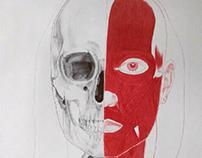 Anatomía. Anatomy