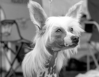 The Dog Show Portraits