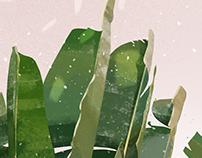 | banana leafs |