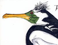 Birds: A Field Guide Through Time