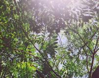 自然の歌 | Nature Song