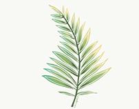 Basic plant collection ·Illustration·