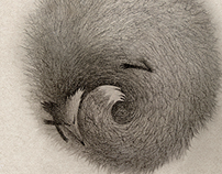 Spiral fox