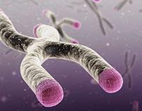 Telomeres Illustration