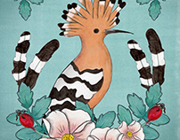 Greek Wildlife -Hoopoe