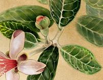 Flower on Whitaker