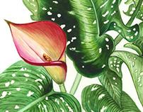 Gala Watercolor