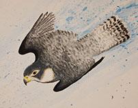 Diving Falcon