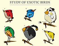 Study of Exotic Birds