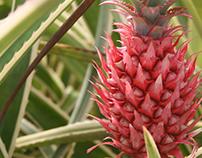 Pink Pineapple- Weaving