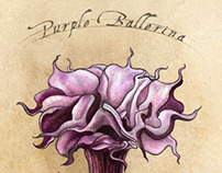 Datura metel--Purple Ballerina