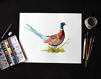 Pheasant, Watercolour