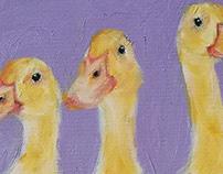 Buffi fluffy ducklings