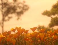 FLOWERS - Light Study. Octane Render