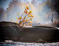 River's Edge - An Exploration of  Edges