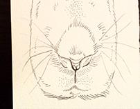 Long-faced rabbit
