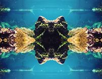 Blue Spring · NZ Matrix