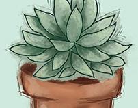 Succulent Trio Illustration