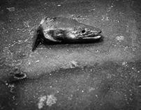 um dia sem peixe