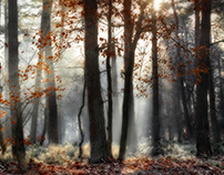 The forest's clothed with winter light