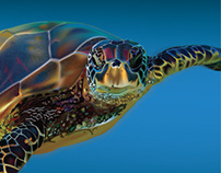 Sea Turtle with İllustrator