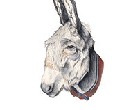 Hosanna the Donkey