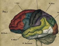 Colour Intellectus