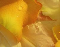 rose-leaf