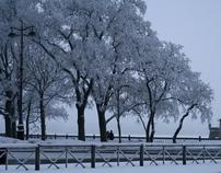 Mists of my winter