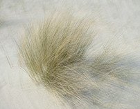 Dunegrass revisited