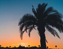 Phoenix, Arizona by Terri Wattawa