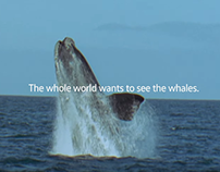 Volkswagen - Whale week - Social Experiment