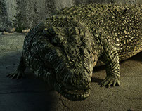 Crocodile model
