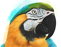 Arara (Parrot) Corel Painter
